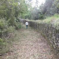 Condeixa-a-Velha - Abertura de estrada, desmatação