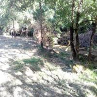 Salgueiro-Sancha - limpeza e desmatação, caminhos e parque natural